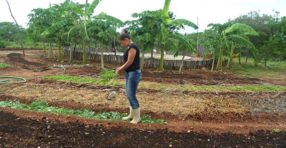 Horta na Escola Família Agrícola Dom Fragoso (Ceará)