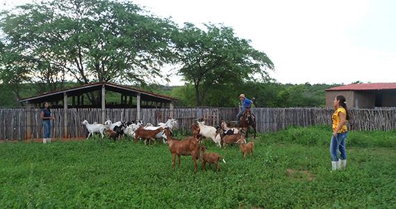 Criação de animais na Escola Família Agrícola Dom Fragoso (Ceará)