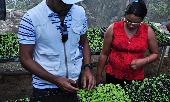 Sementeiro do Sistemas Irrigados Agroecológicos (Rio Grande do Norte)