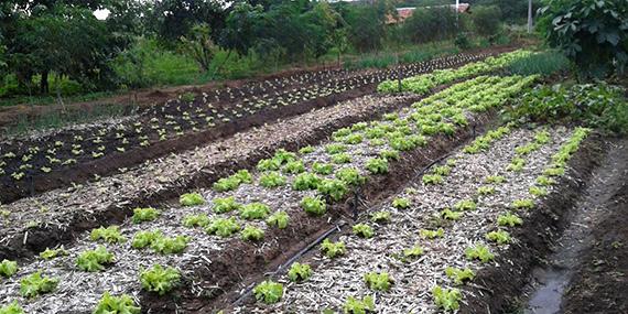 Horta do Sistemas Irrigados Agroecológicos (Rio Grande do Norte)